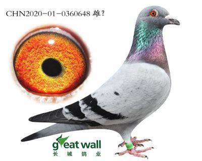 14.�S金��王�O代.0360648