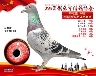 七关鸽王20