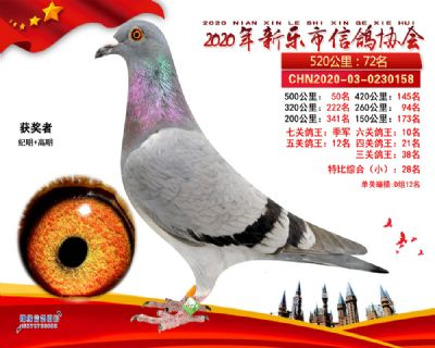 七关鸽王季军