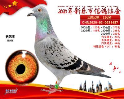 六关鸽王29