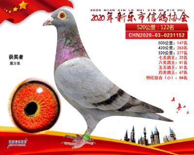 七关鸽王22
