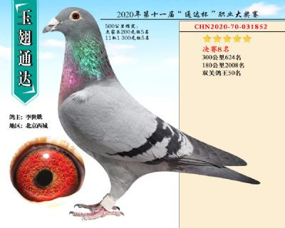 北京玉翅通�_�Q�8名
