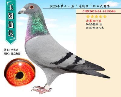 北京玉翅通�_�Q�307名