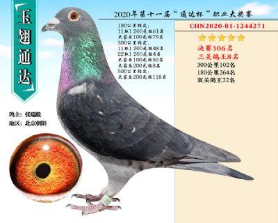 北京玉翅通�_�Q�306名