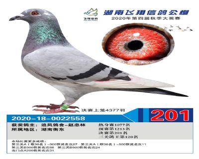 湖南飞翔决赛201名