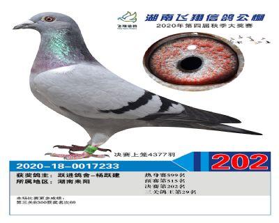 湖南飞翔决赛202名