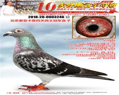 北京爱亚卡普四关鸽王冠军直子