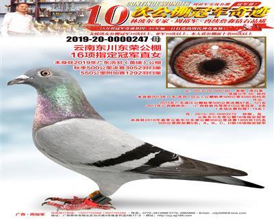 东川东荣公棚16项指定冠军直女