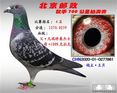 北京�]政秋季700公里拍�u�*第4名*
