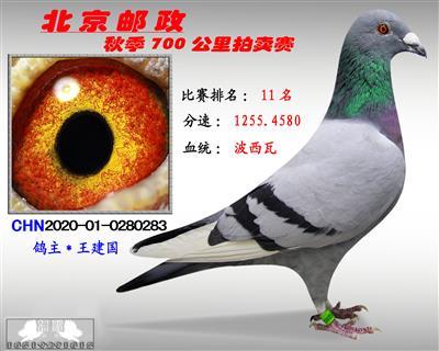 北京�]政秋季700公里拍�u� *第11名*