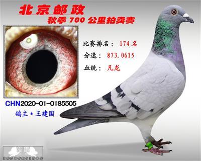北京�]政秋季700公里拍�u�*第174名*