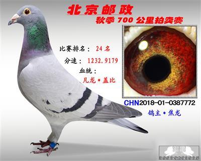 北京�]政秋季700公里拍�u� *第24名*