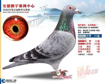 安徽�i宇�Q�31名