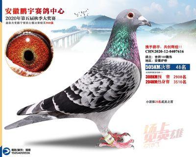 安徽�i宇�Q�48名