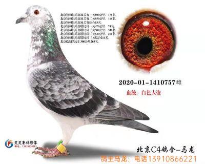 7.�p�P��王53位.白色大�I.1410757