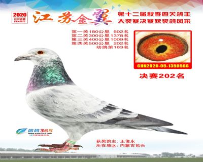 江�K金翼�Q�202名