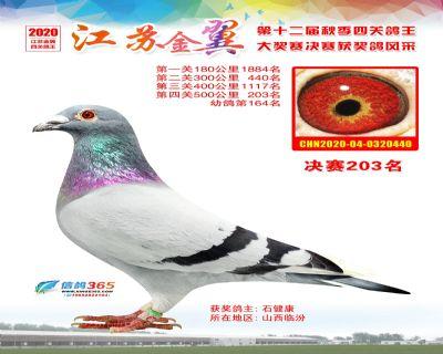 江�K金翼�Q�203名