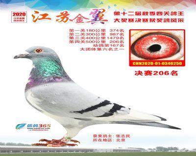 江�K金翼�Q�206名