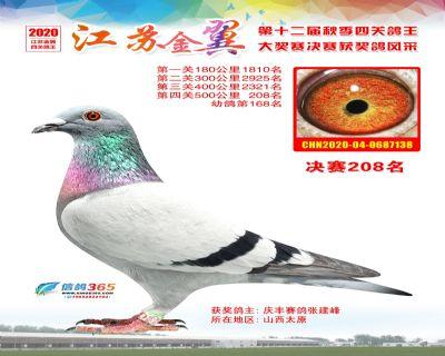 江�K金翼�Q�208名