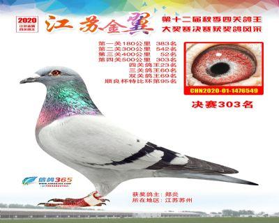 江�K金翼�Q�303名