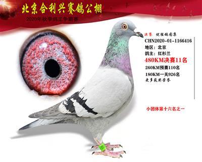 北京合利�d公棚�Q�第十一名