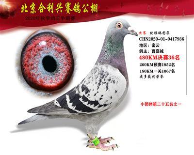 北京合利�d公棚�Q�第三十六名