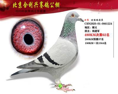 北京合利�d公棚�Q�第六十二名