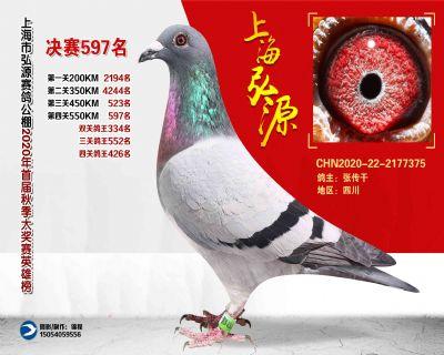 上海弘源决赛597名
