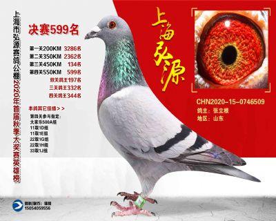 上海弘源决赛599名