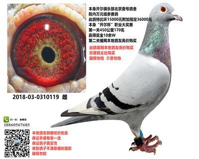 北京壹号鸽舍开尔170位