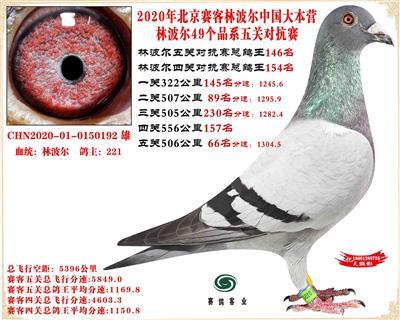 20林波尔中国大本营49个品系近亲配对五关总鸽王146名