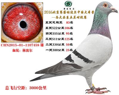 16北京赛客开创铁鹰8400羽四关对抗分速排名83名