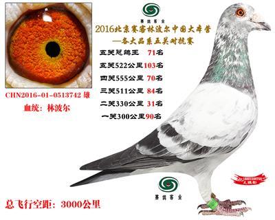 16北京赛客开创铁鹰8400羽四关对抗分速排名71名