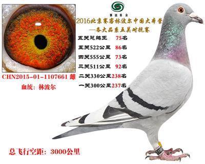 16北京赛客开创铁鹰8400羽四关对抗分速排名72名