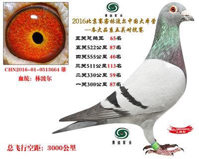 16北京赛客开创铁鹰8400羽四关对抗分速排名65名