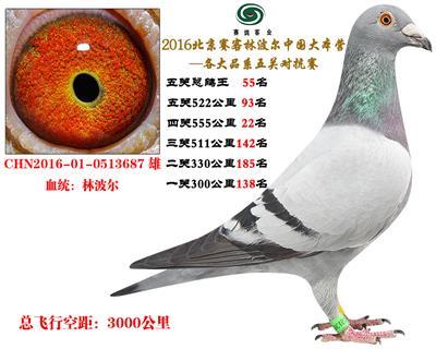 16北京赛客开创铁鹰8400羽四关对抗分速排名55名