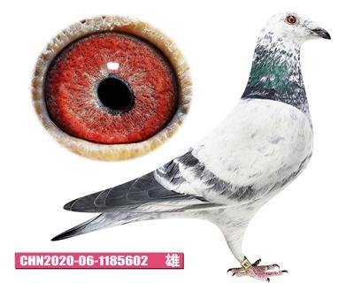 噶斯�D-魅影少年602