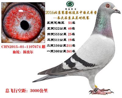 16北京赛客开创铁鹰8400羽四关对抗赛83巴西王子原环直女