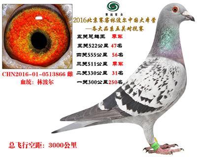 16北京赛客开创铁鹰8400羽四关对抗分速排名总季军