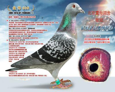 北京壹号张斌大慧翔30名