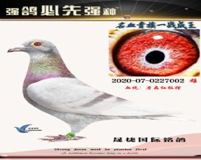红狐094近亲配海尔曼晚生红狐(小雄)