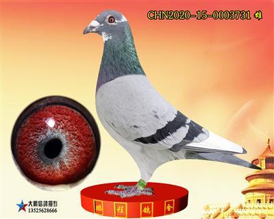 恩格斯231血系