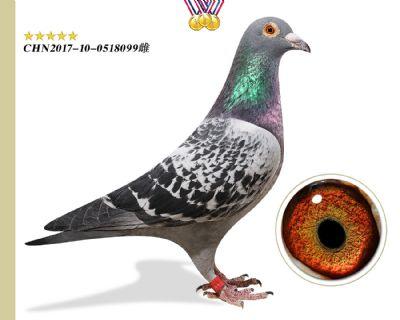 臻品种鸽 重金引进