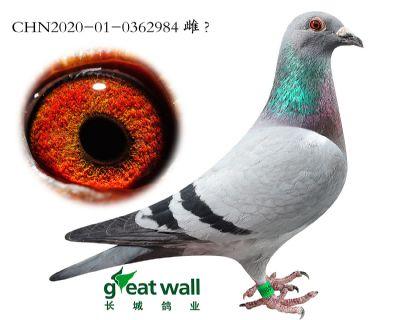 16.新年轻克拉克孙代.0362984