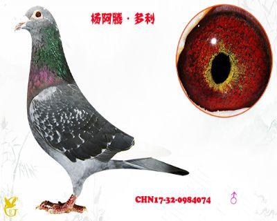 杨阿腾.多利
