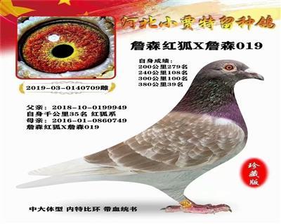 北京王大亮�t狐X詹森019