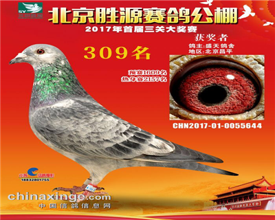 北京胜源赛鸽公棚500公里决赛309名.