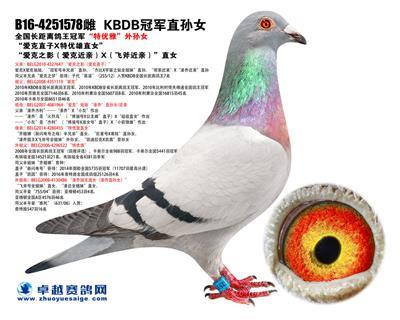 """""""KBDB冠军直孙女"""""""