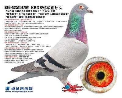 """""""KBDB冠�直�O女"""""""