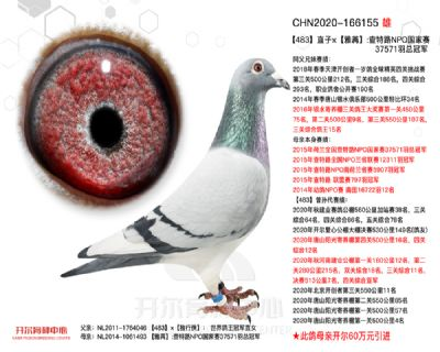 483直子×雅苒:查特路NPO��家��冠�